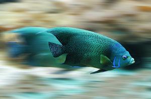 魚スピード.jpg